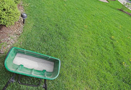 Landscape Maintenance Services in Edmonton - Image3