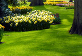Landscape Maintenance Services in Edmonton - Image 2